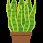 「観葉植物」を英語で何という?