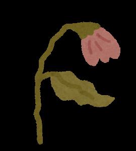 枯れた花の画像