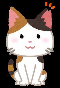 野良猫の画像