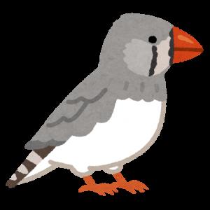 地味な鳥の画像